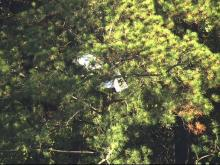 Search crews find plane in Umstead State Park