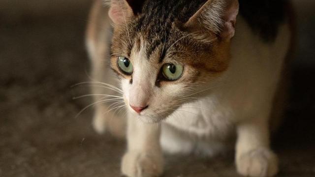 Stray cat animal feral cat
