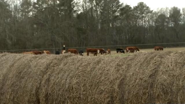 Mark Menscer's farm