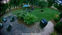 IMAGES: Black bear spotted in Durham back yard