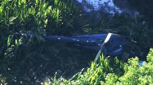 IMAGE: Pilot killed when helicopter crashes in Wayne County field