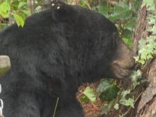 Bear in Washington shot, killed, NC officials looking for answers