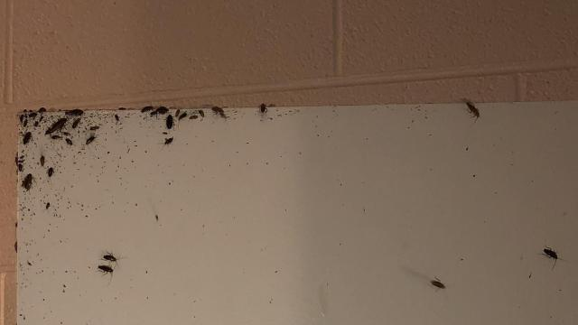 Roaches crawling up the wall. Robinson said roaches infest the closets, dressers, furniture and every room.