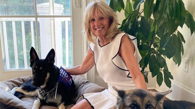 Jill Biden shared this photo of herself and her two dogs with Biden campaign signs.