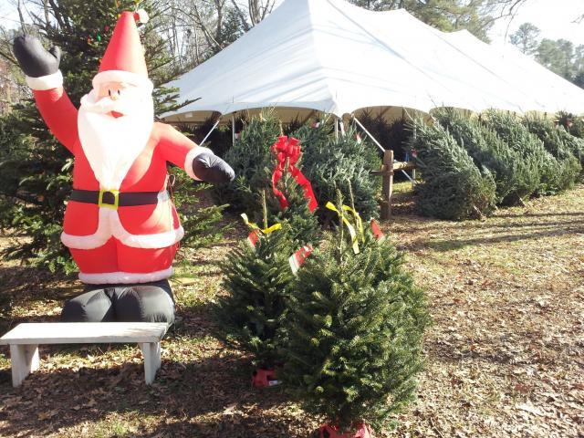 Booger Mountain Christmas Trees