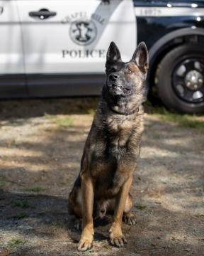 K-9 Ace is retiring from the Chapel Hill police department.
