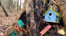 IMAGES: PHOTOS: Fairy houses spotted in the Triangle