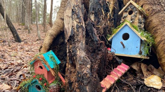 Fairy doors line the trees of Annie Wilkerson Nature Preserve