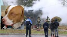IMAGE: 'Hero hound' saves Wilmington woman from house fire