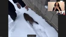 IMAGE: Sir Walter Wally doesn't see shadow, predicts early spring