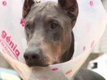 Woman says dog mistakenly neutered