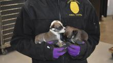 IMAGES: More than 60 neglected dogs, newborn puppies, rescued from waste-filled shack