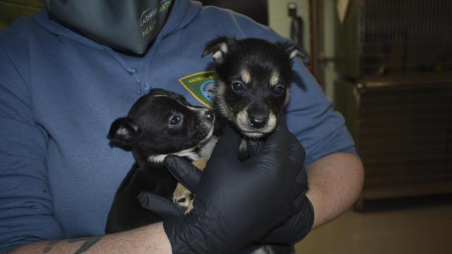More than 60 dogs, including newborn puppies, were rescued from neglect in a waste-filled shack in Caldwell County.