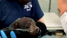 IMAGE: NC Zoo veterinarians take steps to prevent COVID-19 transmission between animals and zoo staff, visitors