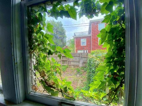 Ivy could be seen growing inside the house, pushing through the antique window sills.
