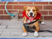 Pet of the Day, June 17: