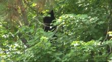 IMAGES: Bear down: Jelly donuts, sardines help coax cub from tree outside Raleigh hospital