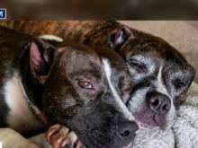 Franklin County Commissioners pass strict ordinance outlawing dangerous dogs