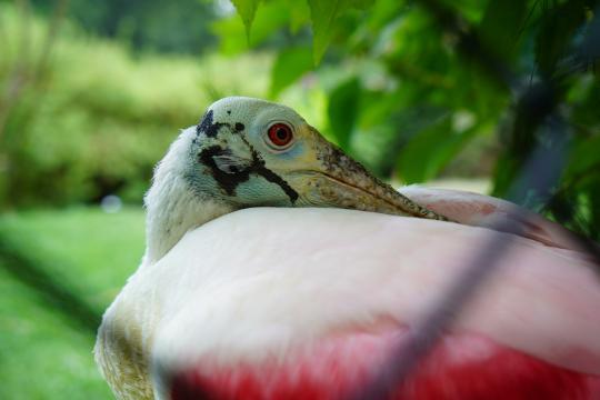 Birds of Sylvan Heights Bird Park