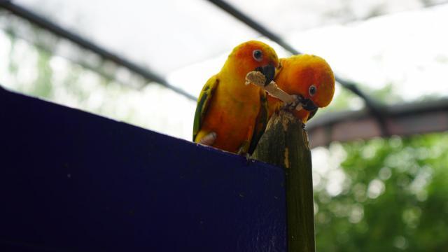 Meet the birds of Sylan Heights Bird Park