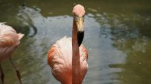 IMAGES: Meet the birds of Sylvan Heights Bird Park