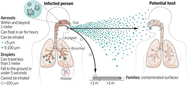 """Figure 1 from """"Airborne transmission of respiratory viruses"""" study, Science Magazine, Aug. 27, 2021."""