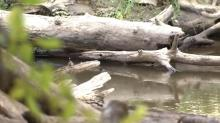 IMAGE: 'It is not safe for anyone:' Log removal underway on the Neuse River