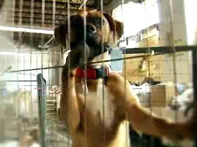 "In Focal Point: ""Puppies and Politics,"" WRAL News examines the issue of puppy mills and the political debate surrounding them."