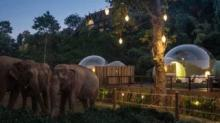 IMAGE: You Can Sleep In Clear 'jungle Bubbles' Surrounded By Rescue Elephants In Thailand