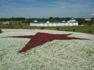 A red star on a field of white earned Best Overall in the N.C. Department of Transportation 2008 Wildflower Awards.