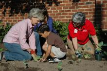 Gov. Bev Perdue planted collard greens and cabbage Friday at the Executive Mansion.