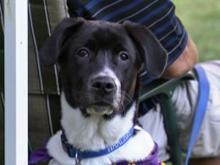 Tracker attends Celebrity Paws for Cope