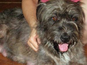 Esther, a terrier mix, was taken in by Dixie Trail Animal Clinic.