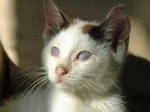 Blind Cat Rescue and Sanctuary in St. Paul, N.C., is one of only two shelters in the country that provide  a permanent home dedicated solely for blind cats. (Photo courtesy of Blind Cat Rescue and Sanctuary)