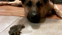 IMAGE: Unlikely animal friendship brings joy, Instagram fame
