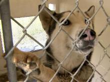 NC shelter kills 99 percent of animals, records show