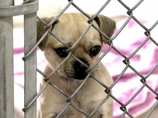 Wake SPCA rescues 14 animals from high-kill shelter