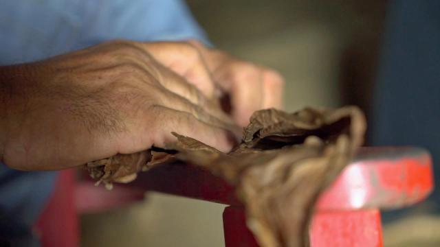 Oreste Diaz, a Cuban tobacco farmer, demonstrates how to make a Cuban cigar.