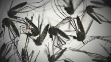 IMAGES: Zika forum held in Raleigh to brainstorm virus solutions