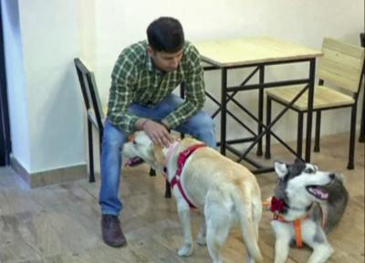 Dog cafe opens in India