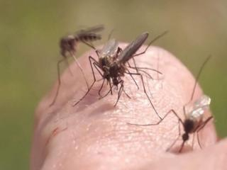 Local mosquitoes eyed in Florida Zika cases