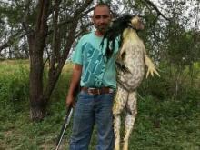 13-pound bullfrog