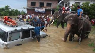 Elephants help rescue people from floods