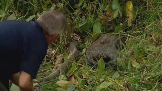 Man rescues deer stuck in deep mud