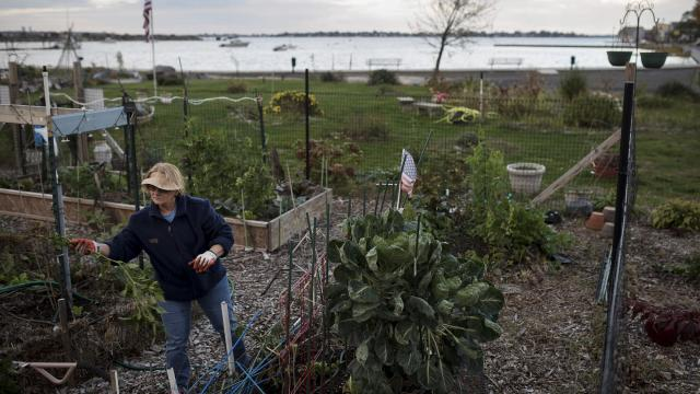 Francine Mahoney in the Edgewater Park community garden in New York, Nov. 9, 2017. The Federal Emergency Management Agency is substantially redrawing New York's flood maps for the first time in three decades, a painstaking process that will affect thousands of people, with millions of dollars at stake. (Karsten Moran/The New York Times)