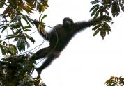 IMAGES: A Census of Gorillas and Chimpanzees Finds More Than Expected