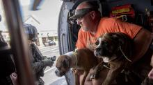 IMAGE: Charges dropped against woman who operated illegal animal shelter during Florence