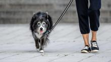 IMAGES: Even a 10-Minute Walk May Be Good for the Brain