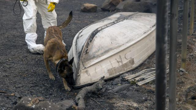 A specialist and dog search for people still unaccounted for in Paradise, Calif., on Wednesday, Nov. 14, 2018. At least 48 people have died in the Camp Fire, the deadliest wildfire in the state's history. (Eric Thayer/The New York Times)