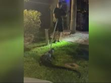 Florida family finds gator in their garage!